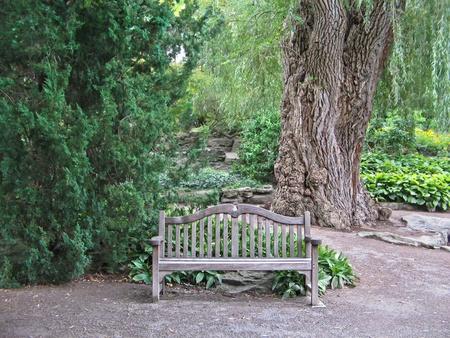 Wooden bench in peaceful garden.