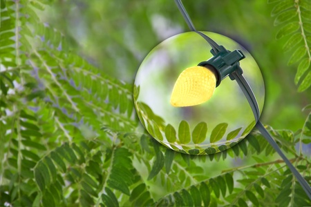 Yellow Christmas light on tropical green tree Stock Photo