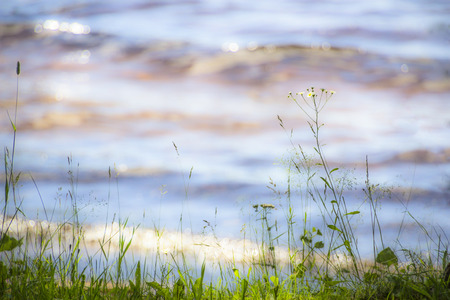 Beach Grass with Soft Waves in the Background photo