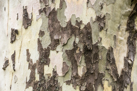 closeup view of tree bark with three colors Stock Photo