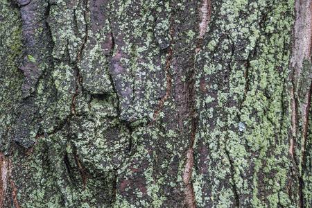 Closeup view of rough green mossy bark