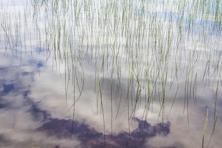 still water: Shore grass with cloudy sky reflected in still water Stock Photo