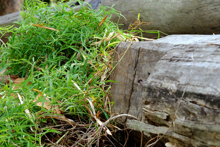 clump: clump of grass on wood, growth