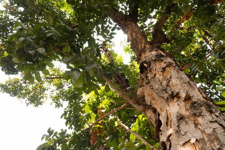 tall tree: Tall tree Sunny Stock Photo