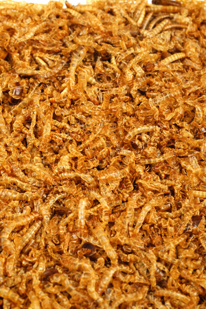 mealworm: mealworm dead