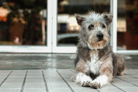 the fittest: Thailand Dog Looking a Hope