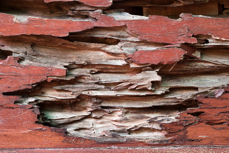 drywood: texture of traces of termites eat wood