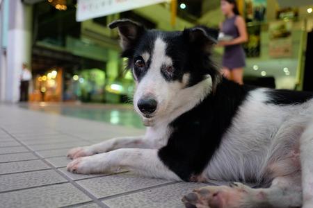 one eyed: One eyed dog sitting