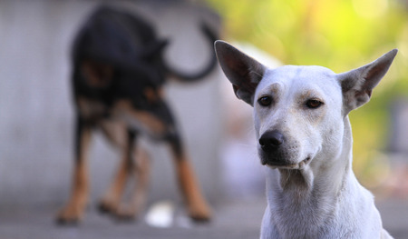 fittest: Thailand Dog Looking a Hope - (Selective focus) Stock Photo