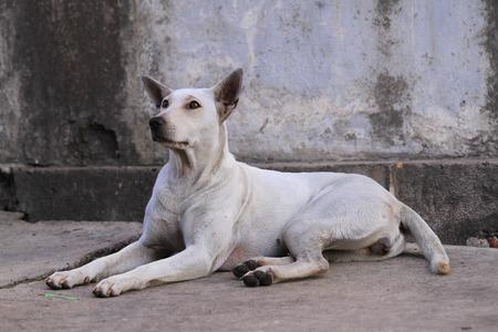 fittest: Dog in Thailand sitting