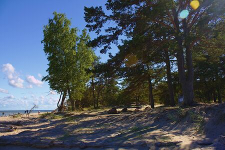 Trees at the beach in Latvia
