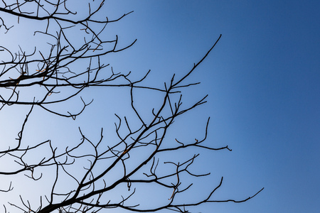 tree branch with blue sky in autumn season