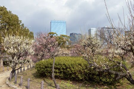 A park in the city decorated with ume blossoms