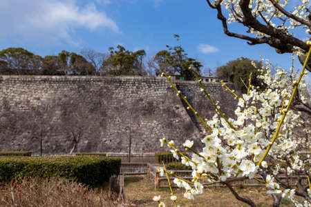 Ume blossoms in the castle