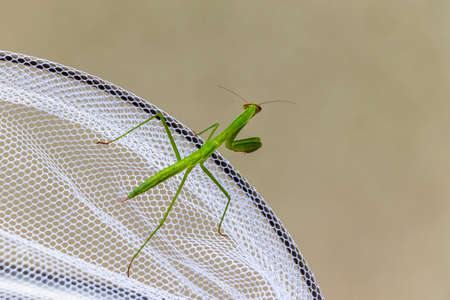 Mantis and insect net 写真素材