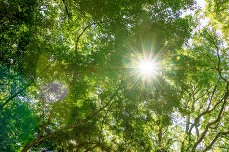 Sunlight through into green forest