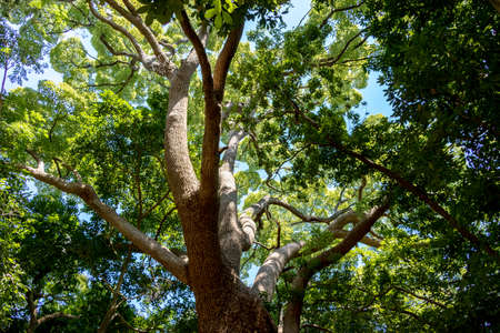 A large tree with branches extending toward the sky