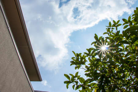 Blue sky, green leaves and sun