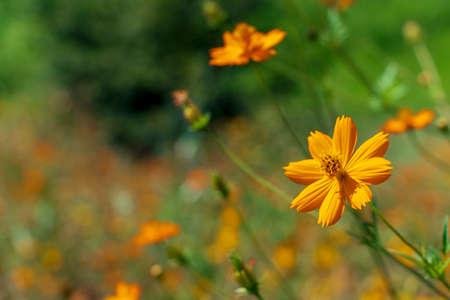 Orange flowers blooming in the field