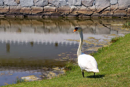 A swan nestled by the moat of a castle