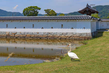 A swan in the garden at Japanese castle