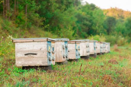Photo of wooden colored beehives in the nature. Beekeeping.