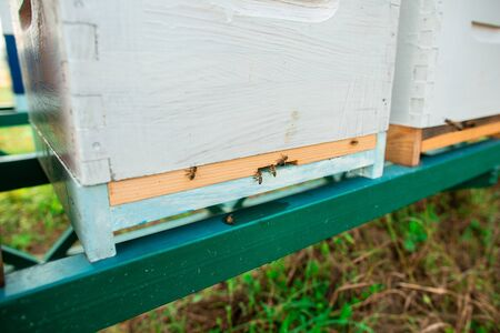 Bees flying near the hive. Close up of entrance of bees into a wooden colored hive. Bees are working.