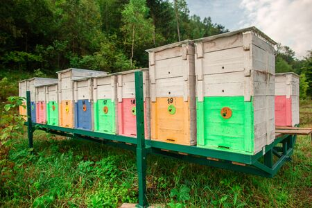 Photo of wooden colored beehives on metallic green stand in the nature. Beekeeping. Stock Photo