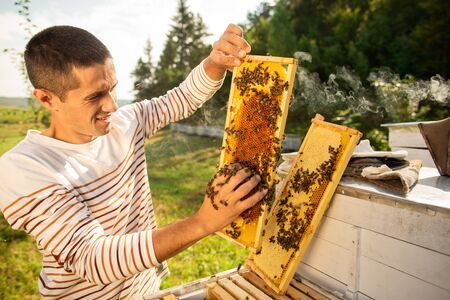 Beekeeper holding a honeycomb full of bees. A man checks the honeycomb and collects the bees by hand.