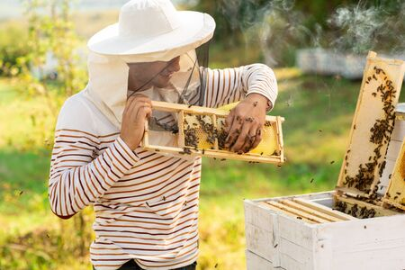 Beekeeper holding a honeycomb full of bees near the beehives. A man checks the honeycomb. Beekeeping concept.