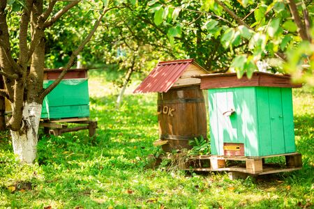 Photo of beautiful colored beehives in green summer garden, between trees. Beekeeping.