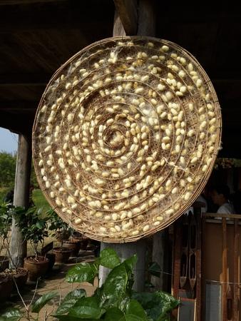 cocoon: Silkworm Cocoon Nest Stock Photo