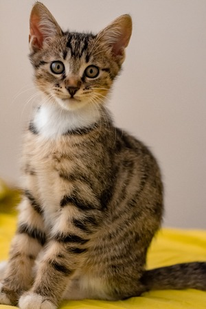 A little kitten is looking at the camera with sweet looks