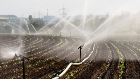 Watering crops in western Germany with Irrigation system using sprinklers in a cultivated field. Stock Photo