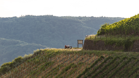 People sitting on a bench in a vineyard on a beautiful sunny day. Reklamní fotografie