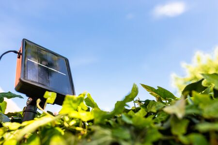 A small, home solar panel, placed between the plants supporting the garden lamps.