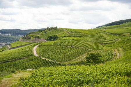 Beautiful wineries in the summer season of western Germany, visible road between rows of grapes.