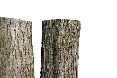 Two old tree trunks standing in a row, on white background .