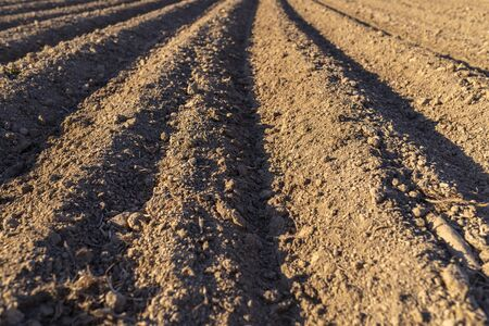 Plowed soil for planting potatoes, visible even rows of soil and sharp shadow of the sun.