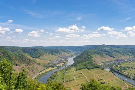 Beautiful, ripening vineyards in the spring season in western Germany, the Moselle river flowing between the hills. In the background of blue sky and white clouds.