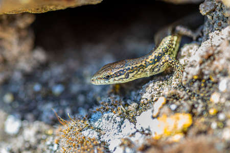 A macro shot of a lizard standing on a rock in front of a pit on a hot summer day.