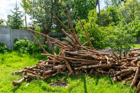 Peeled, uncut logs lying on a pile on the ground in the backyard.