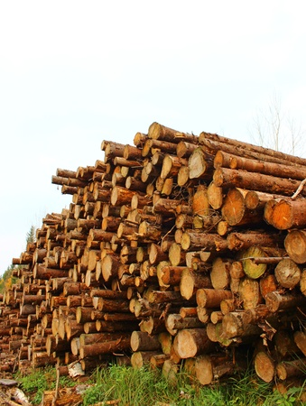 Logs in the logging photo