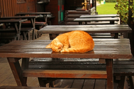 Redhead cat on a table at an outdoor cafe photo