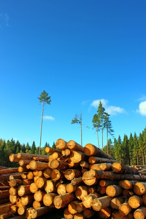 logging: Logs in the logging