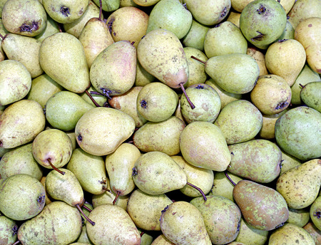 juicy: Backgrounds of many ripe juicy yellow pears