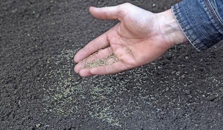 semilla: Sembrando semillas de césped en el suelo en el césped