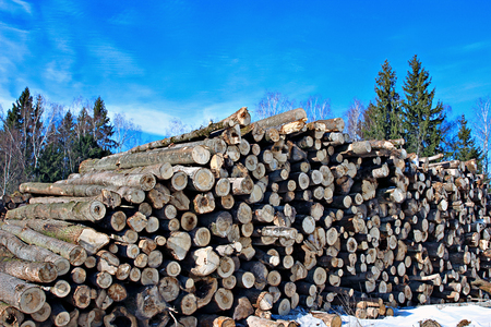 winter wood: Harvesting timber logs in a forest in Russia in winter