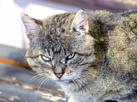 displeasure: Dissatisfied with the cat menacingly look