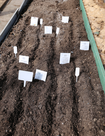 furrow: Sowing seeds in the soil in the garden in early spring Stock Photo